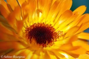 Fleur a